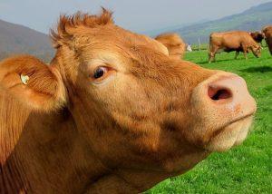 Monsanto Patent Tiere Pflanzen