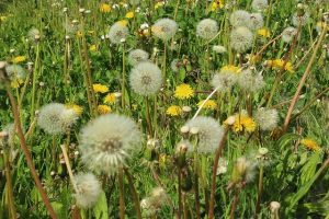 Sport bei Pollenallergie – ungesund?