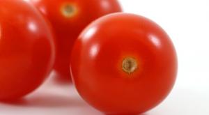 Tomaten – rot, grün, giftig