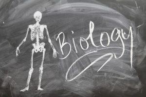 Biologie Essverhalten