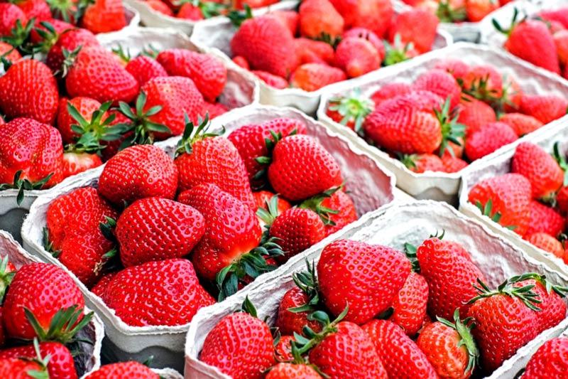 Erdbeeren können bedenkenlos gegessen werden