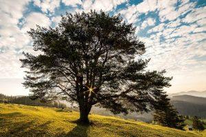 Heilerde – Wirkung und Anwendung eines Naturheilmittels