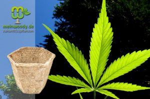 Im Test: Kompostierbare Pflanztöpfe aus Hanf von MeinWoody