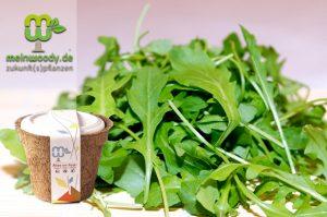"""Frischen Salat direkt vom Balkon mit dem Bio-Salat-Mix """"Spicy"""" von MeinWoody"""