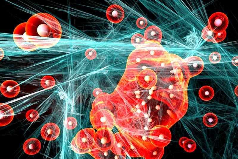Nutritional Neuroscience – Essen soll uns intelligent machen