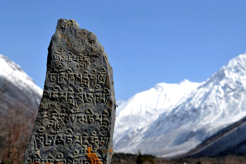 Gurke Himalaya