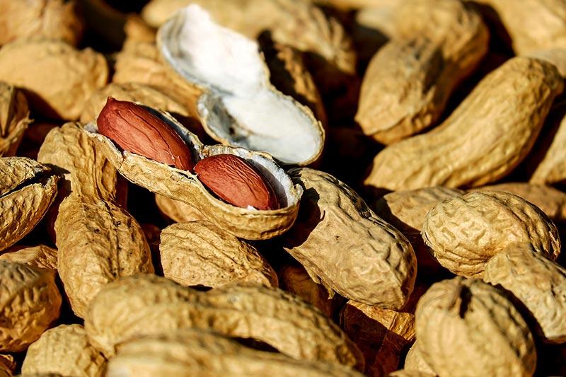 Erfolgreiche Behandlung Erdnuss-Allergie