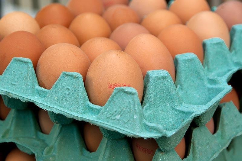Lebensmittelskandal Gift Eier NRW Holland