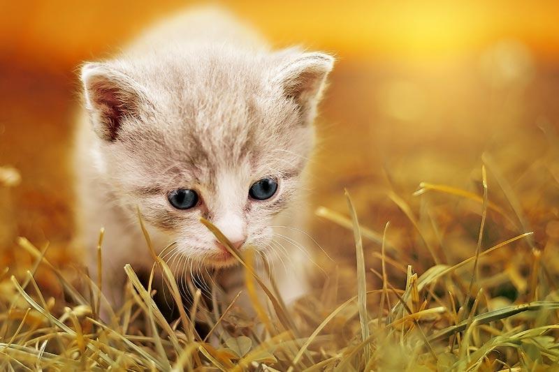 Weltkatzentag: Haustiere als Klimakiller