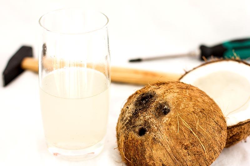 Kokosnuss öffnen – mit und ohne Hammer!