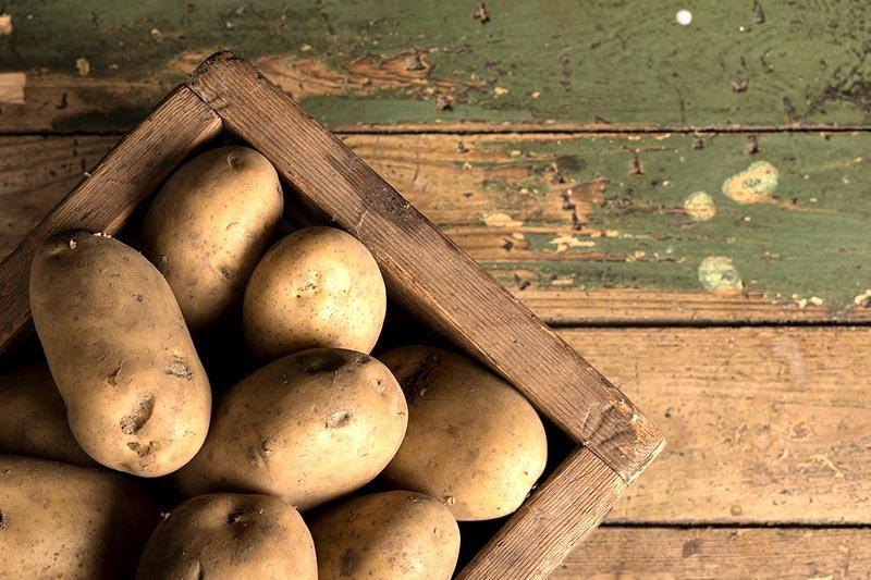 Stärke Kartoffelsorte mehlig festkochend