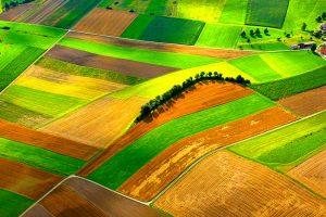 10 Dinge, wie DU zu einer gesünderen Landwirtschaft beitragen kannst