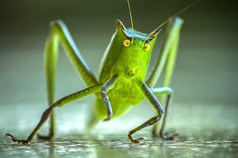Insekten im Essen