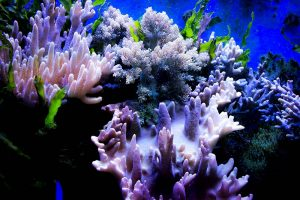 Plastik Korallen krank