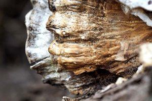 Schuhe aus Pilzen