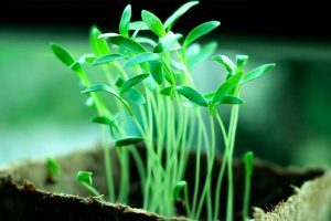 Pflanzen patentieren