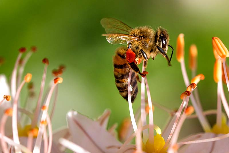 EU Pestizide Gefahr Bienen