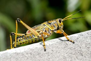 Insekten essen