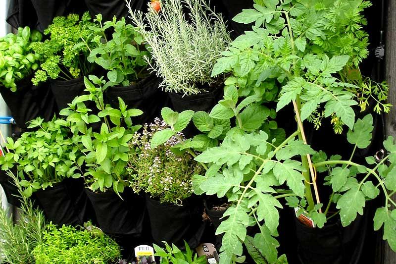 Nordbalkon Gemüse pflanzen