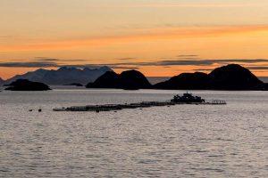 Norwegischer Lachs nachhaltig Aaquakultur