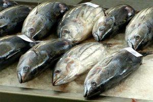 Quecksilber Fisch Grenzwerte!