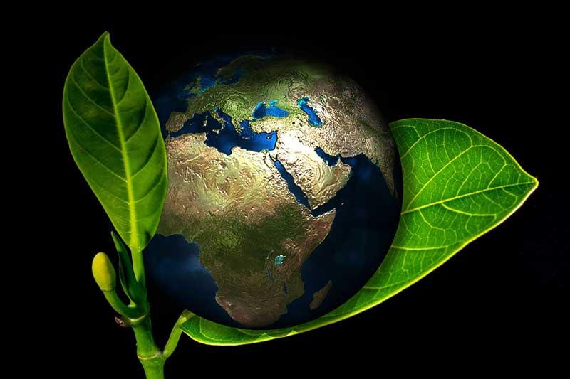 Bio-Lebensmittel - weltweiter Boom