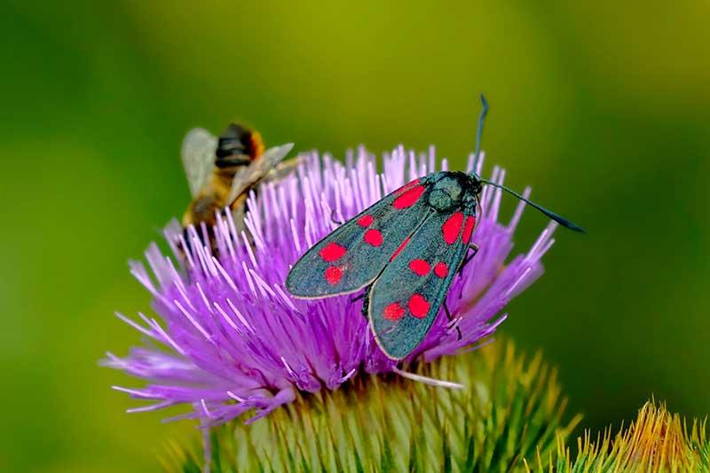 Insektenbestände gehen zurück