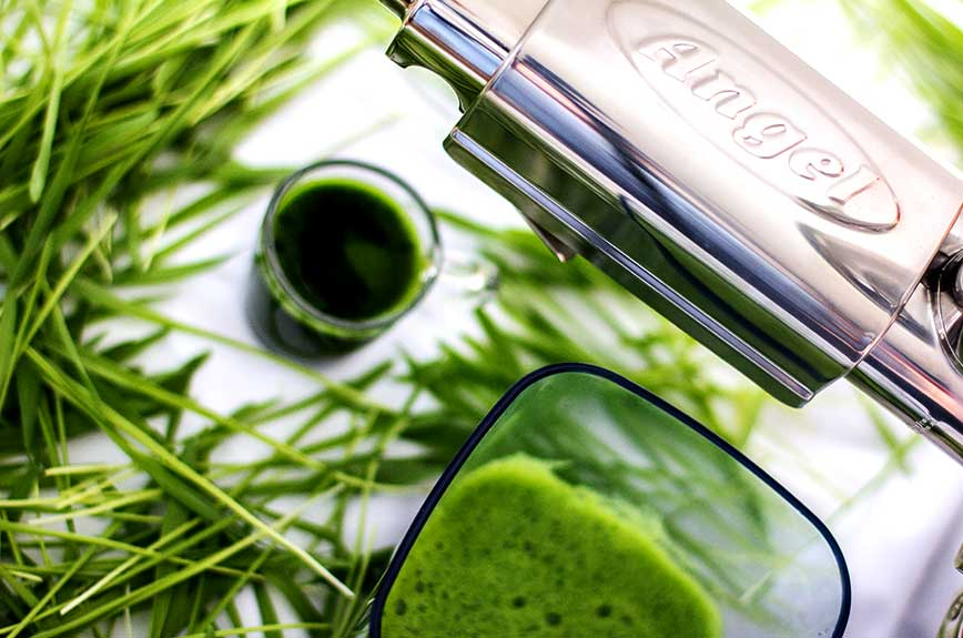 Angel Juicer Gerstengrassaft