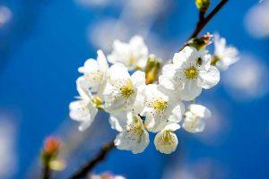 Gartentipps Gartenpflege April