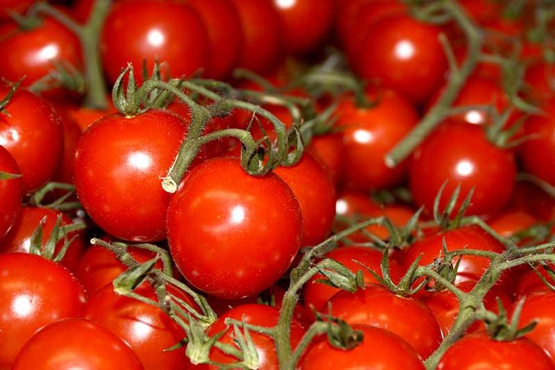 Tomatensorten Supermarkt