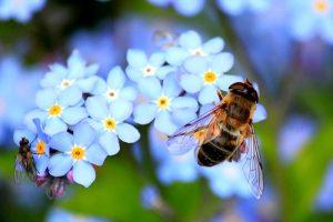 5 Dinge, die wir für die Bienen tun können