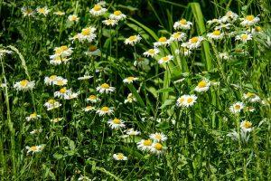 Gartentipps Gartenpflege Juni