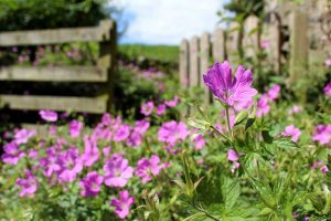 Gartentipps und Gartenpflege im Juli