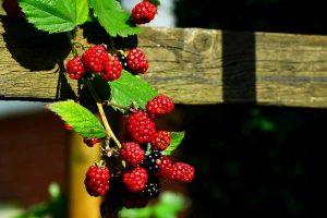 Gartentipps und Gartenpflege im September