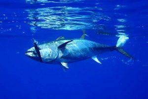 Klimawandel fördert Quecksilberbelastung in Fischen