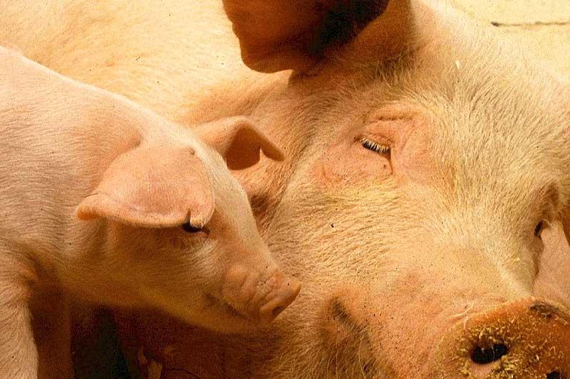 Eisenstange gegen Tierschützer