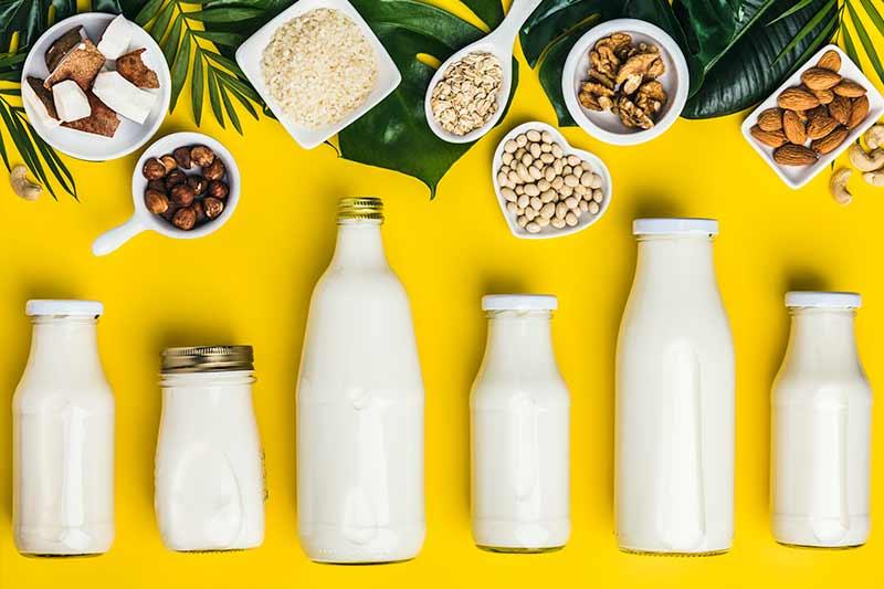Volkskrankheit Laktoseintoleranz