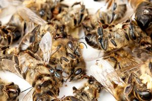 Insektensterben: der Mensch ist der größte Killer