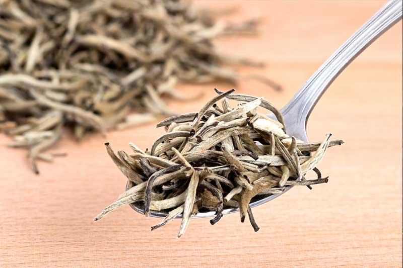 Weißer Tee – Luxus-Getränk mit jahrtausendalter Geschichte