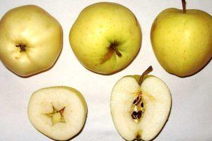 Kornapfel – gesund und für Allergiker geeignet
