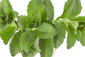 Eignet sich Stevia zum Abnehmen?