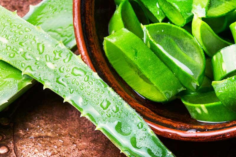 Schön und gesund durch Aloe Vera