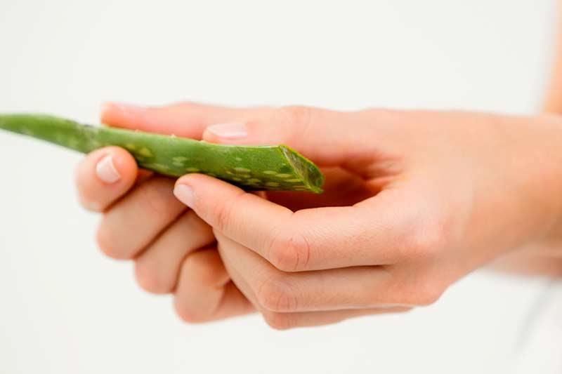 Hausmittel Haut Aloe Vera
